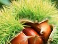 板栗的营养价值与攻效